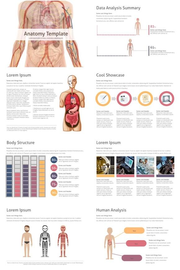 219 Anatomy PowerPoint Template - Anatomy